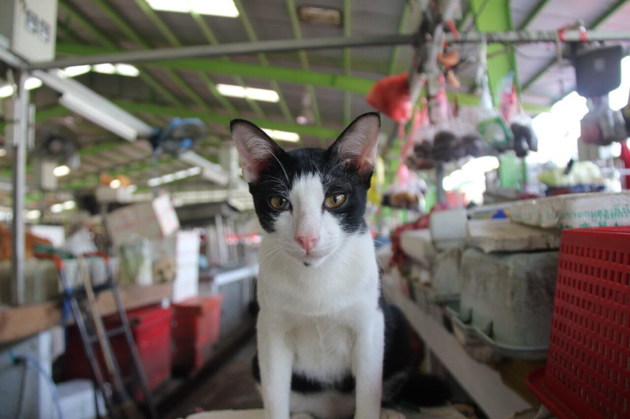 Le terrible commerce de la fourrure de chiens et de chats en Chine