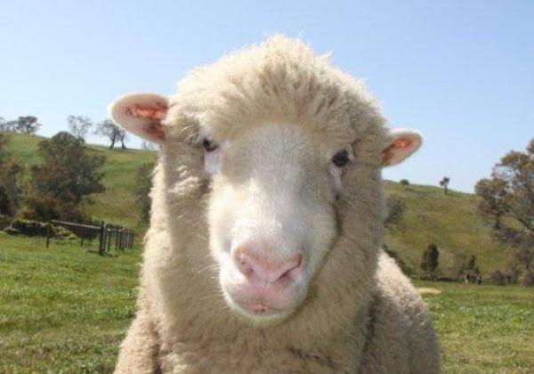 Etam dit non à la laine mérinos australienne