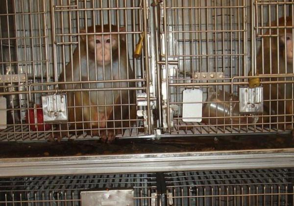 Empêchez Air France d'expédier des singes vers leur mort !