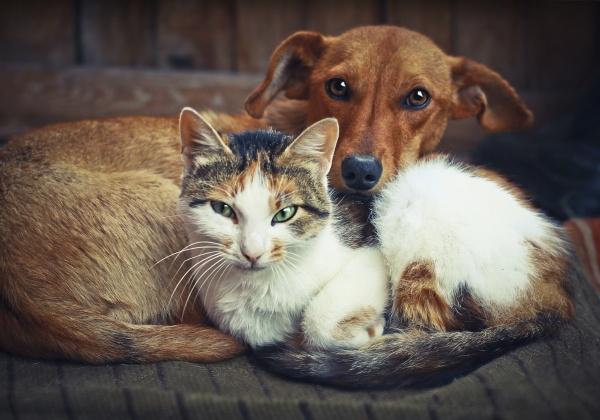 6 moyens d'agir pour les animaux ce Noël
