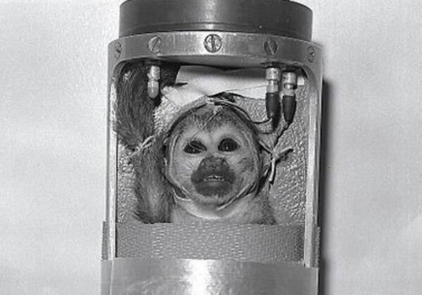 Les singes ne sont pas des cosmonautes ! Demandez à la Russie de laisser les animaux en dehors de sa conquête spatiale