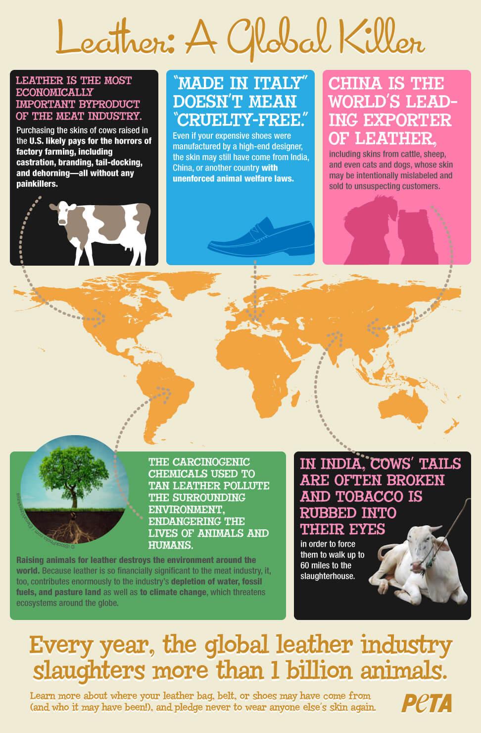 L industrie du cuir   Animaux utilisés pour les vêtements   PETA France 0f2eb03f524