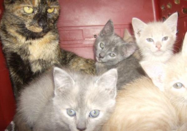 L'abandon des animaux : la crise et son remède