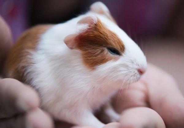 REACH : le plus grand programme d'expérimentation animale au monde