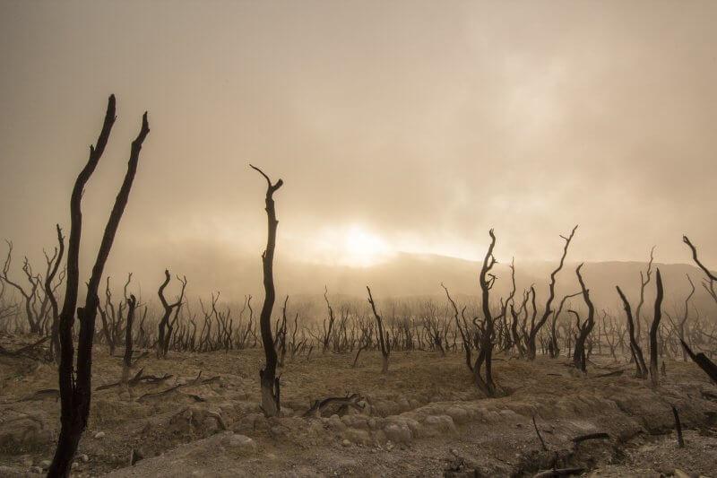 déforestation viande élavage environnement