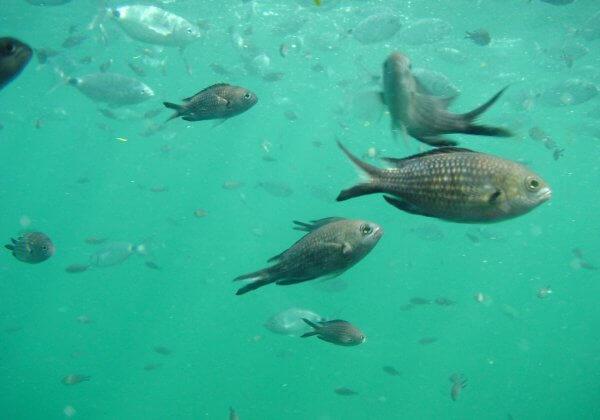 poisson animaux sensibles