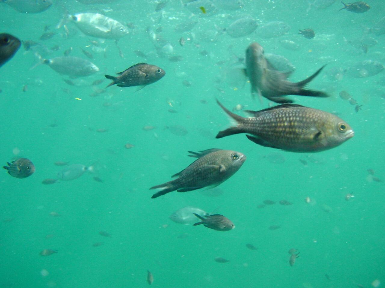 Journée mondiale de l'océan : la solution est dans l'assiette