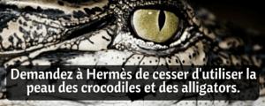 Demandez à Hermès de cesser d'utiliser la peau des crocodiles et des alligators.