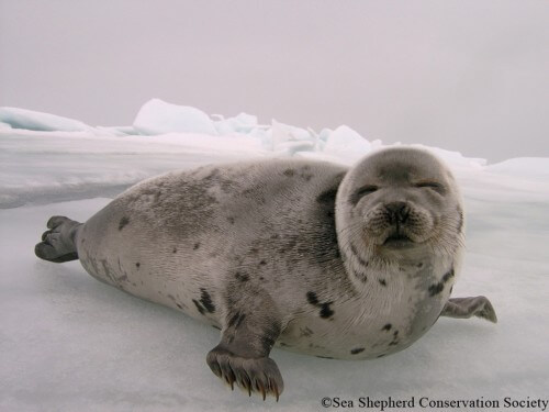 Dites au Canada de mettre fin au honteux massacre des phoques