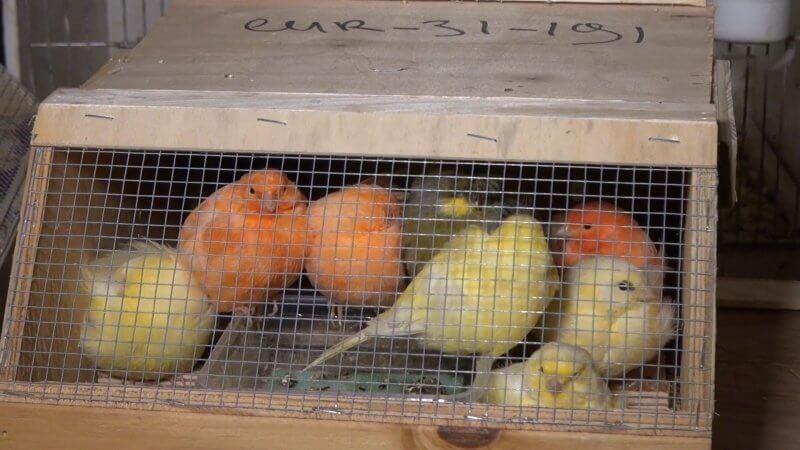 animalerie transport oiseaux