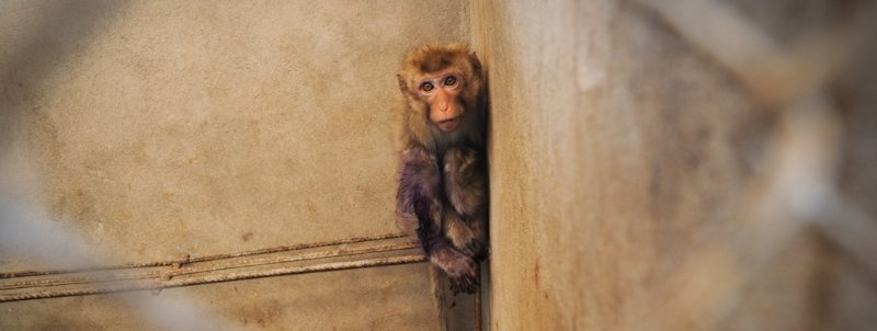 MonkeyBreeding3_Laos-2385