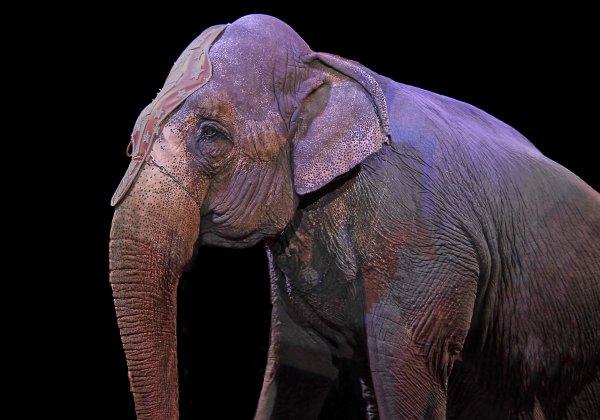 Faites interdire les cirques avec animaux sur le territoire de votre commune