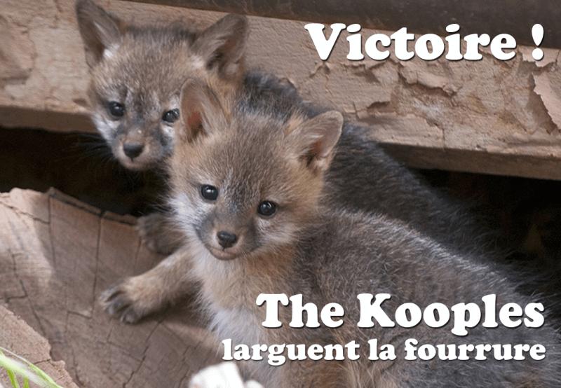 kooples-victory-1