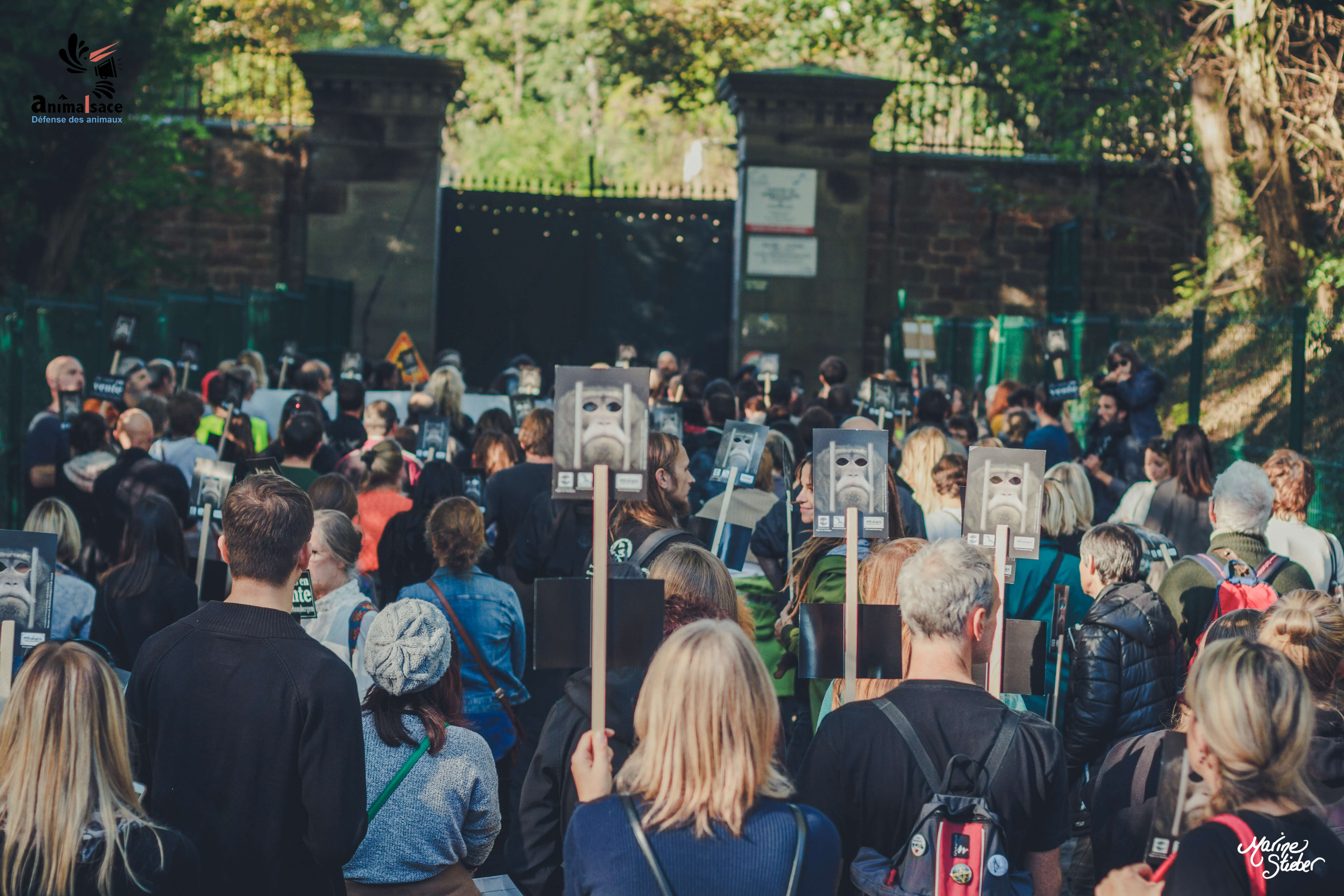 Des centaines de primates humains ont défilé à Niederhausbergen
