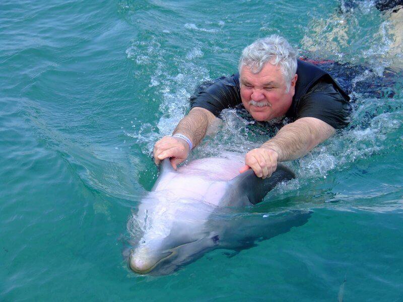 dauphin nager tourisme