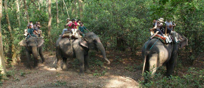 éléphant promenade dos tourisme