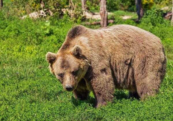 Contactée par PETA, cette discothèque n'exhibera plus d'animaux sauvages