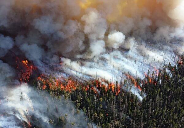 16 faits qui montrent comment devenir végan aide à arrêter le changement climatique