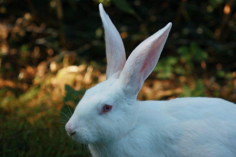 hare-1662514_1920