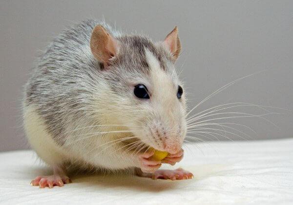 La Chine adopte son premier test sans animaux pour les cosmétiques