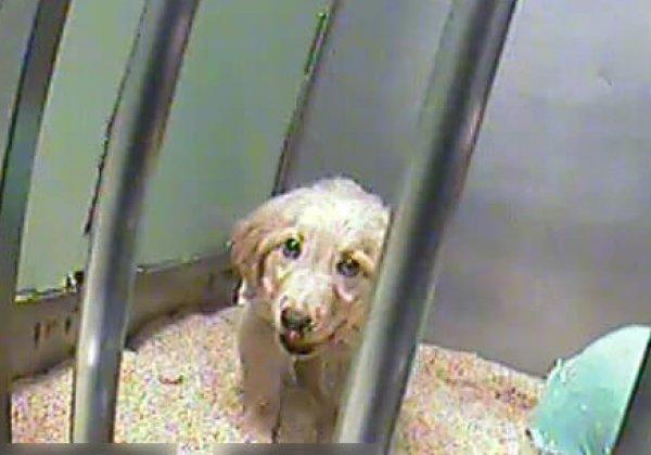 « La souffrance est réelle » : ces expériences sur les chiens sont financées par Téléthon