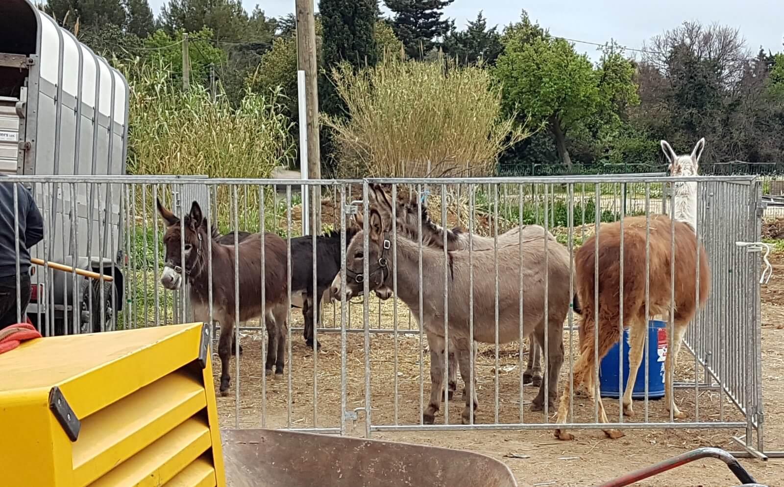 Grâce à son action elle parvient à faire interdire les cruels cirques animaliers dans sa commune