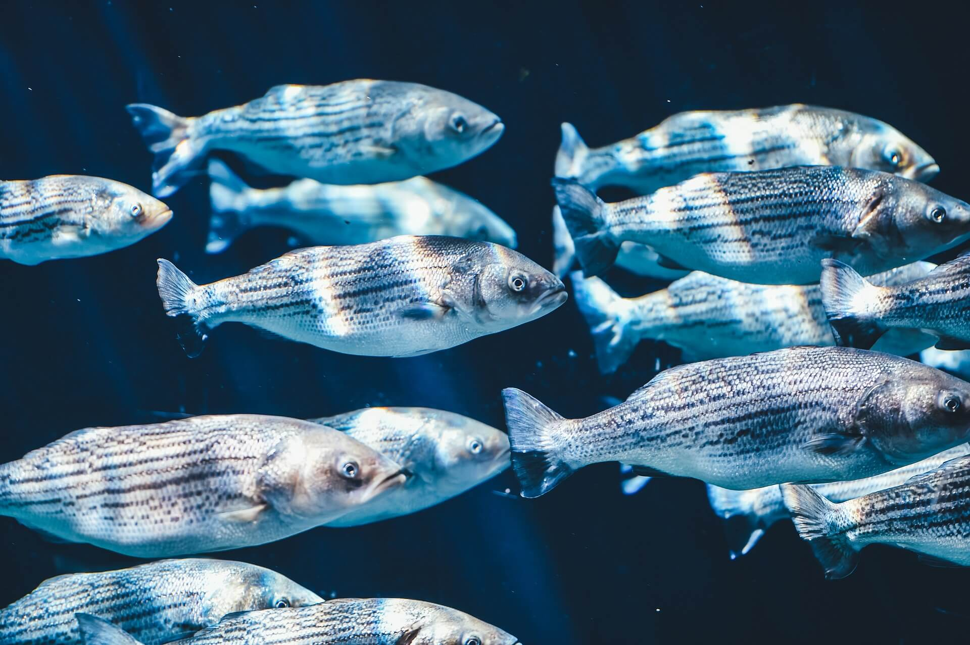 L'intelligence des poissons