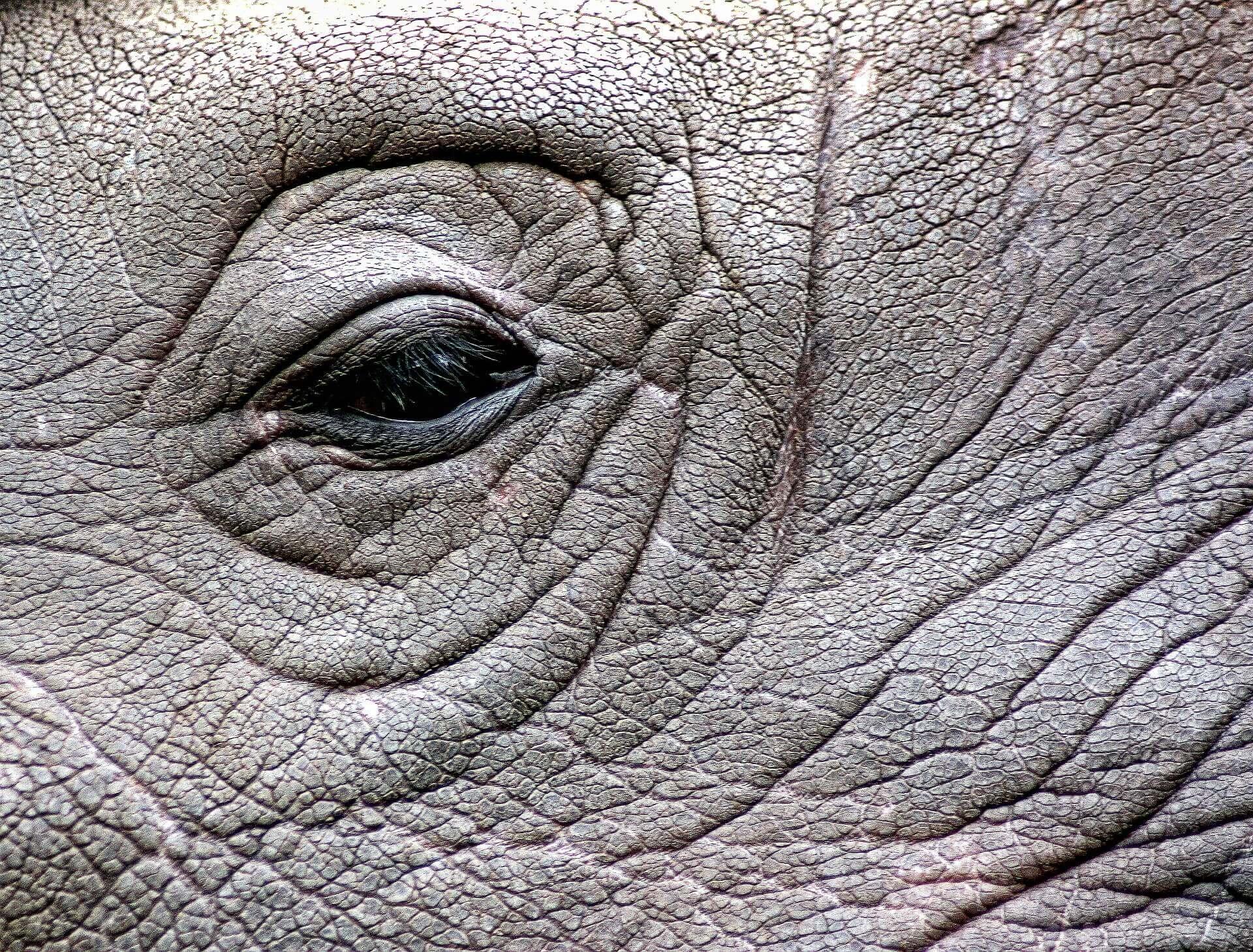 En France, des braconniers assassinent un rhinocéros pour sa corne