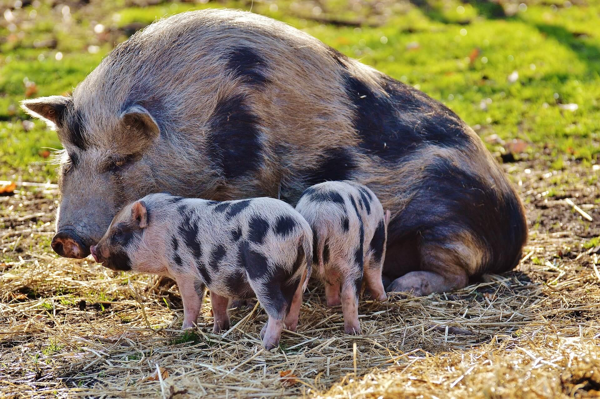 Semaine mondiale sans viande: le pourquoi du comment
