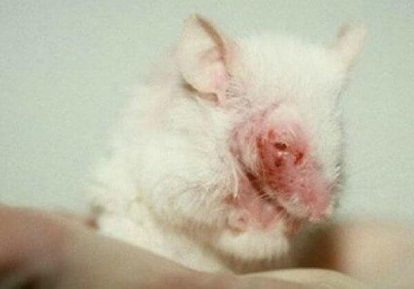 Sauvez l'interdiction : agissez contre les tests de cosmétiques sur les animaux