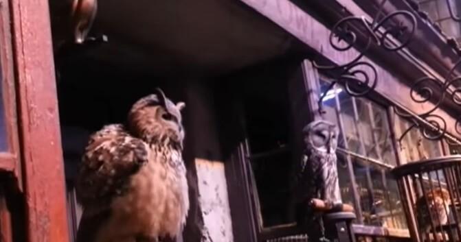 Victoire ! Le Warner Bros Studio Tour London confirme ne plus utiliser d'animaux