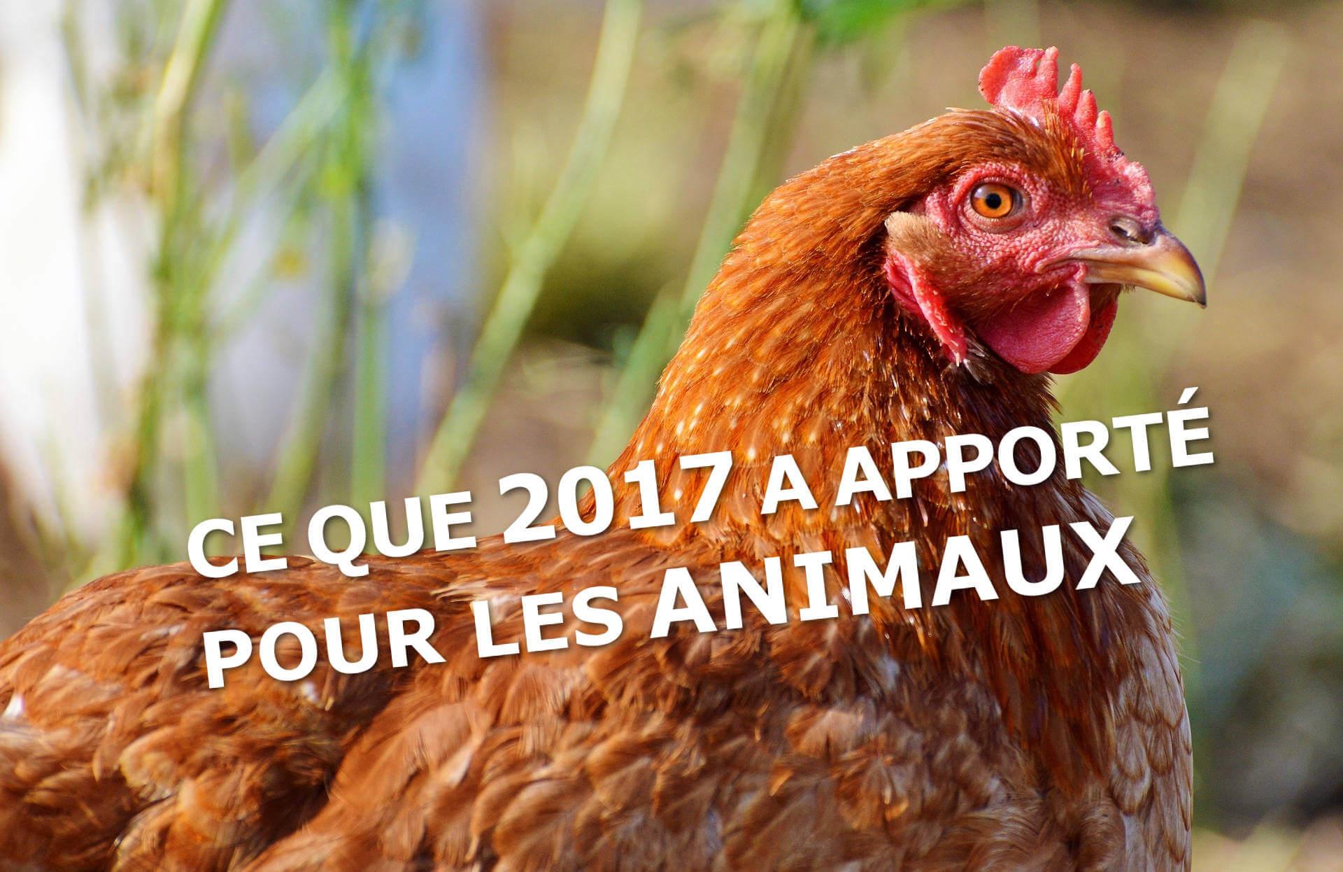 Les plus grandes victoires de 2017 pour les animaux