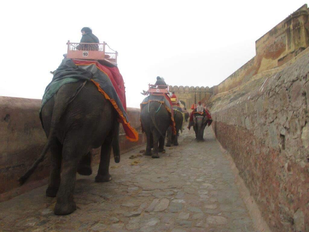 Inde : Des éléphants aveugles et malades contraints de porter de lourdes charges