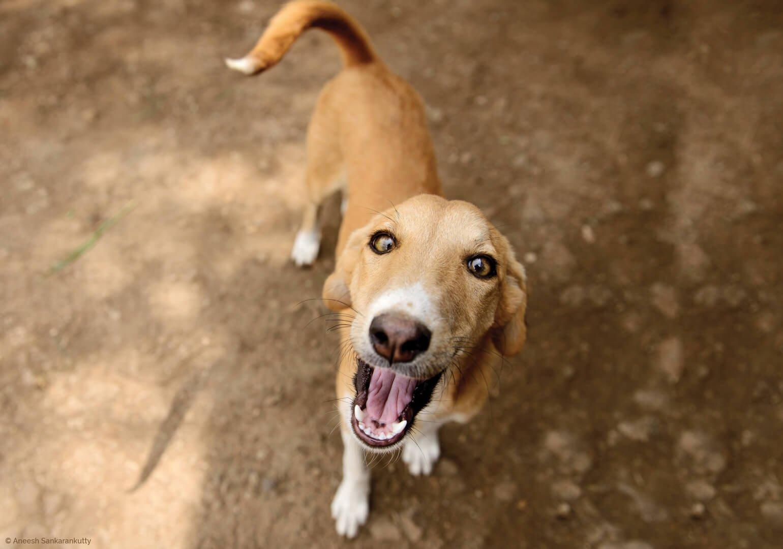5 façons simples et rapides d'aider les animaux en un clic