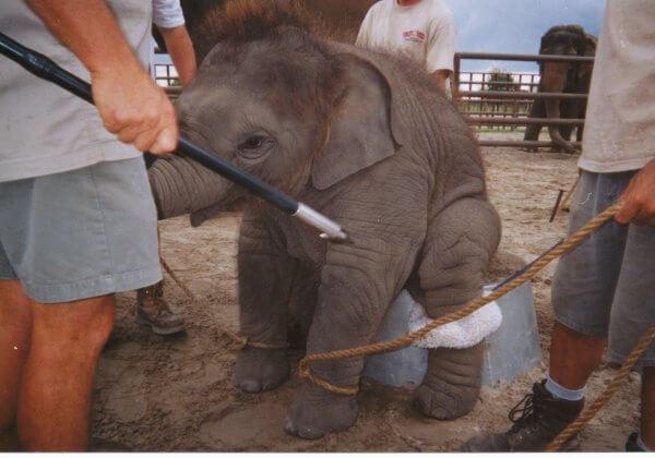 Voici pourquoi vous ne devriez jamais monter sur un éléphant