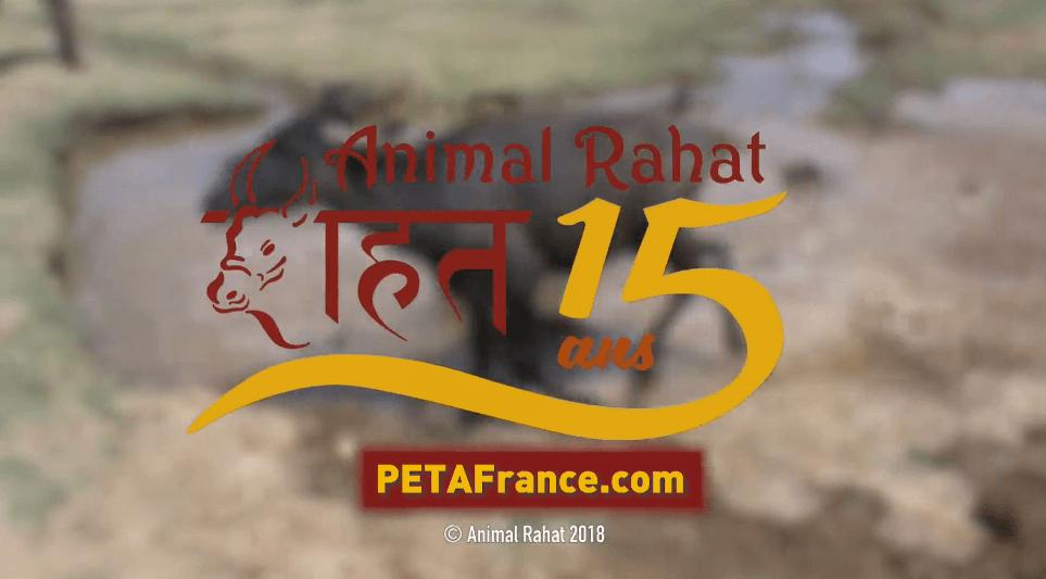 Animal Rahat: 15 ans de travail pionnier pour les animaux