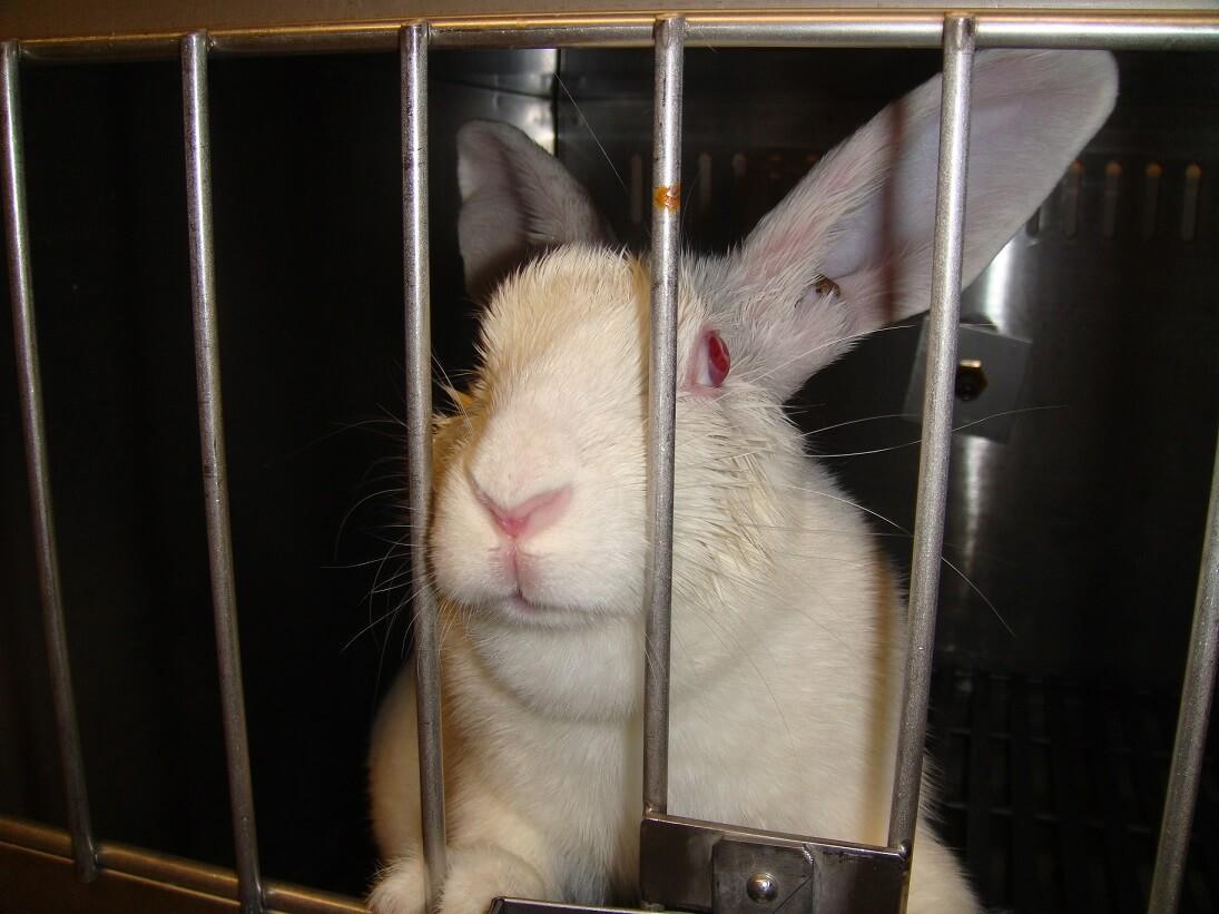 PETA et d'autres groupes de défense des animaux collaborent pour mettre fin aux tests de cosmétiques sur les animaux