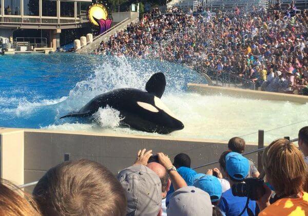 Appelons TUI à arrêter de soutenir la maltraitance des orques