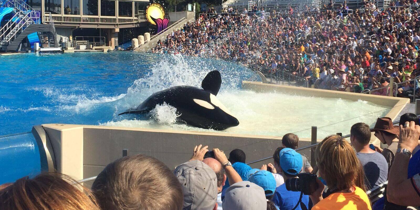 RIP : Kayla est la 42ème orque à mourir chez SeaWorld