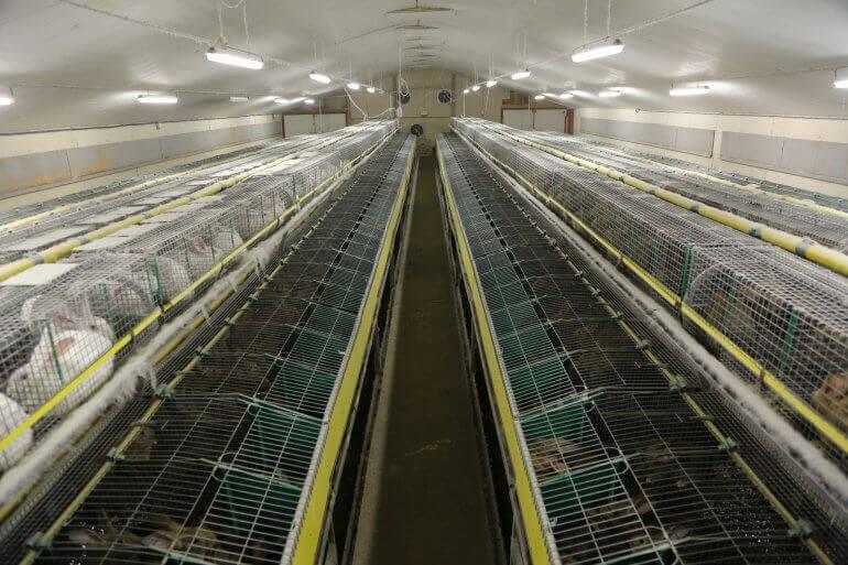 Le Parlement européen demande la fin de l'élevage en cage d'ici 2027