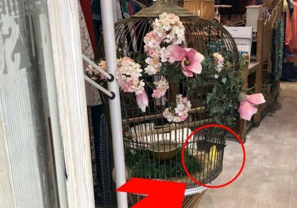Depuis 2004, ce canari ne connaît que les barreaux de sa cage : aidez-le !