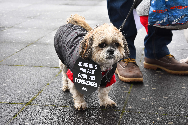 Ce que PETA France a accompli pour les animaux en 2018