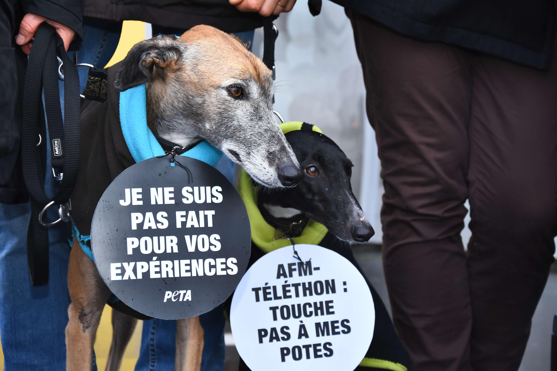Une meute de chien proteste contre les tests sur leurs congénères financés par l'AFM-Téléthon