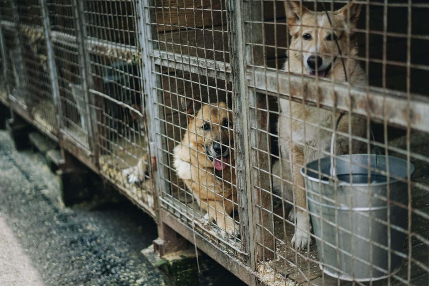Les chiens souffrent en Roumanie–  voici comment vous pouvez les aider