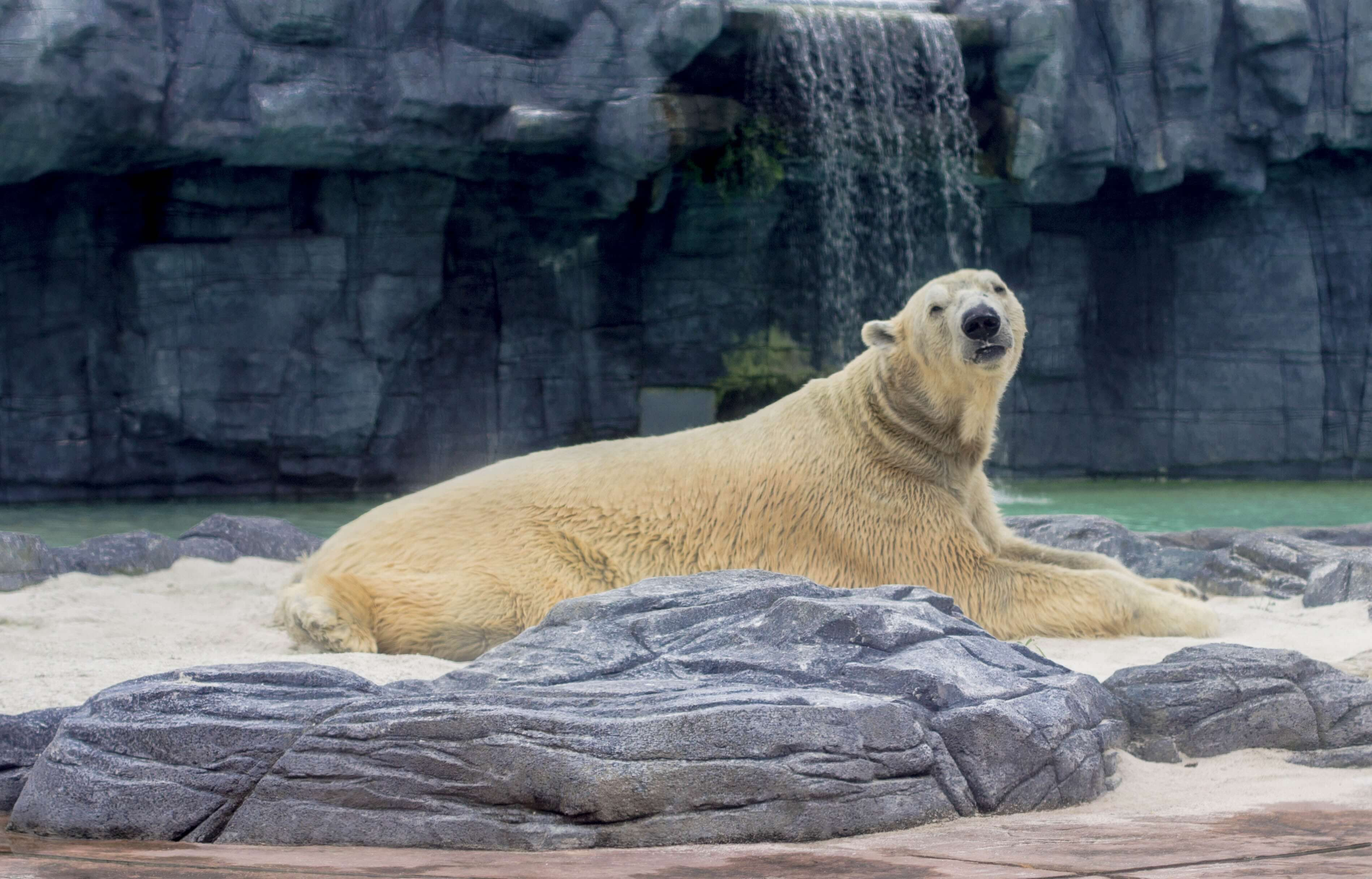 In captivity, the typical polar bear enclosure is estimated to be only a millionth the size of its species' natural environment.