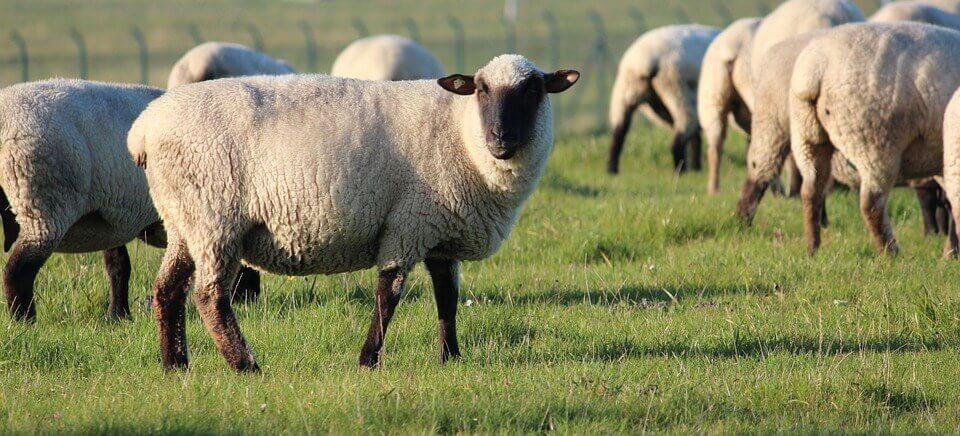 L'impact désastreux de la laine sur la planète