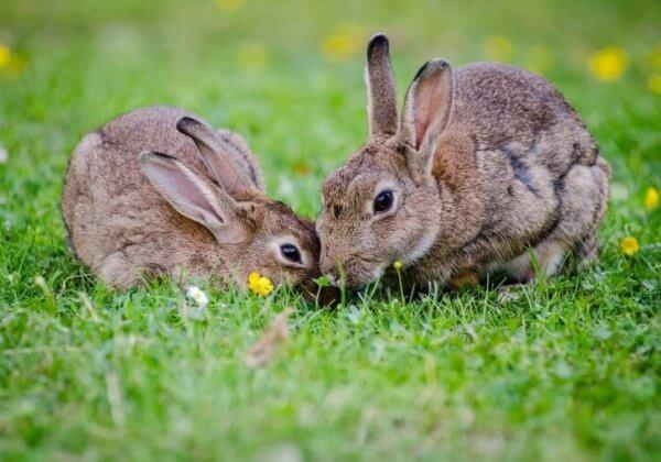 PETA répond à vos questions sur l'expérimentation animale pour les cosmétiques