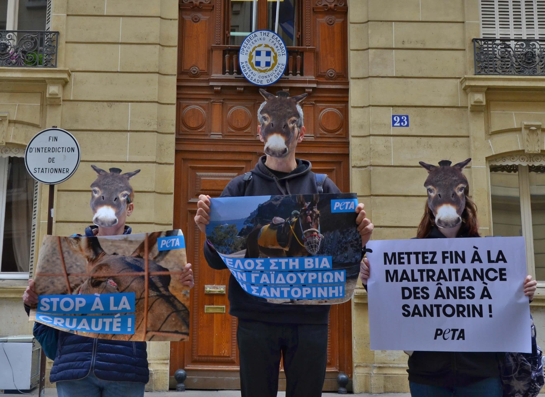 Des « ânes » protestent contre l'exploitation animale sur l'île de Santorin
