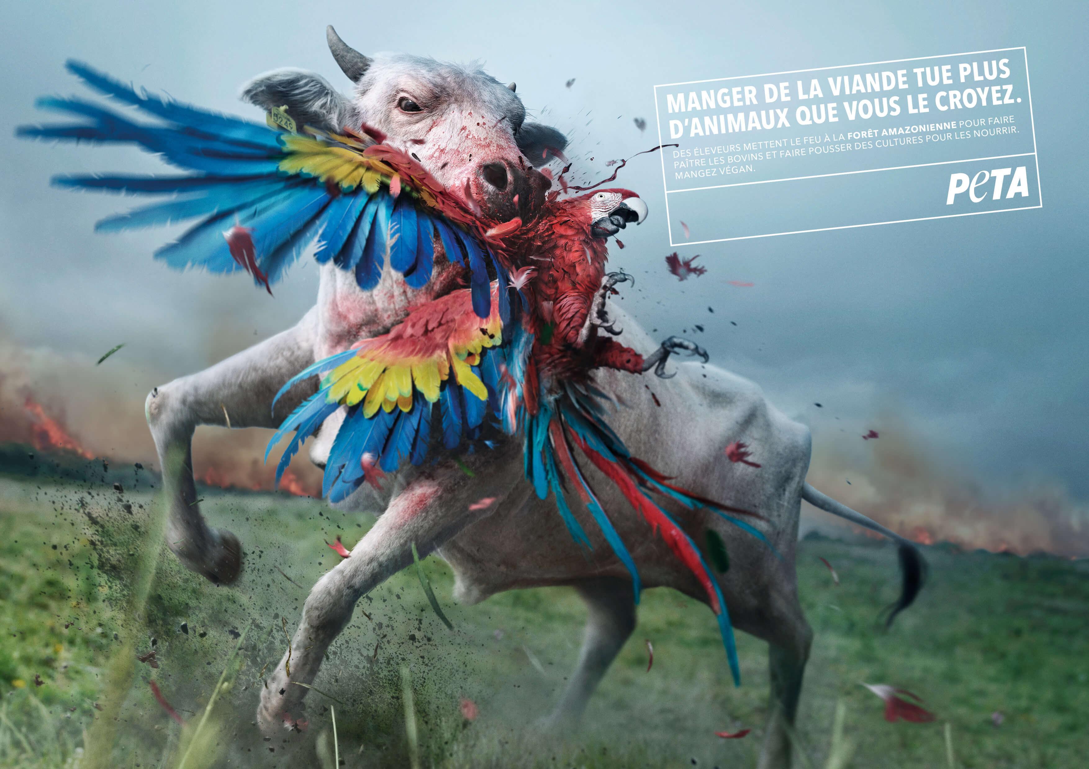 Une nouvelle publicité de PETA blâme les mangeurs de viande pour les incendies en Amazonie