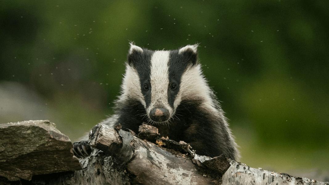 Le groupe L'Oréal arrête les pinceaux en poils d'animaux après la campagne de PETA États-Unis